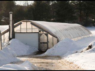 Выращивание огурцов в отапливаемой теплице зимой