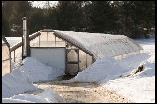 Как вырастить огурцы в зимней теплице
