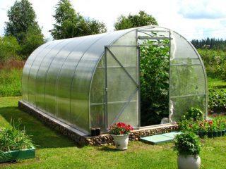 Как можно ускорить рост огурцов в теплице