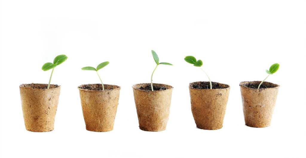 Как выращивать рассаду огурцов в торфяных горшочках