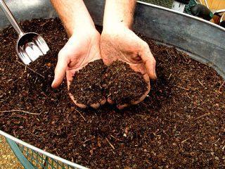 Почва для рассады огурцов