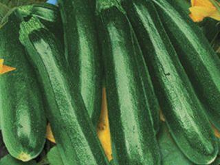 Сорта длинных и тонких кабачков