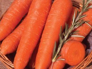 Какая морковь самая сладкая и урожайная