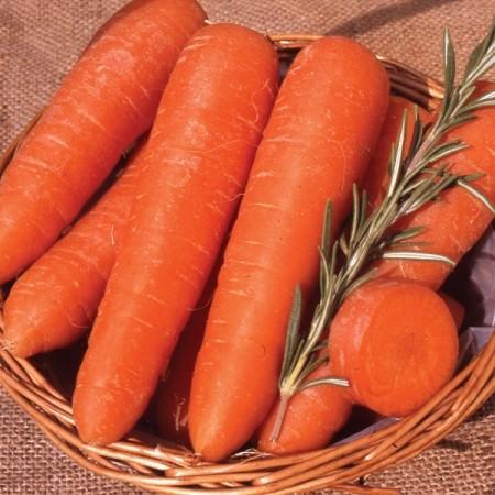 Самые сладкие сорта моркови для хранения