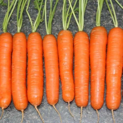 Лучшие сорта гранулированной моркови