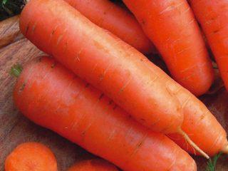 Сорта моркови с тупым концом