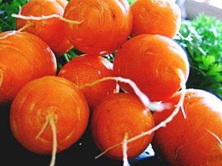 Короткоплодная и толстая морковь