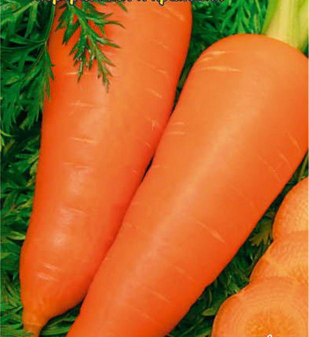 Какой сорт моркови сажать
