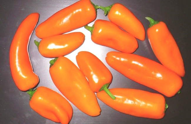 Перец сладкий Апельсин: описание, фото, отзывы