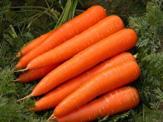 Популярные сорта моркови
