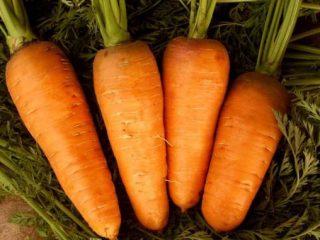 Морковь: сорта для Средней полосы России