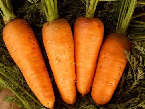 Лучшие сорта и гибриды моркови