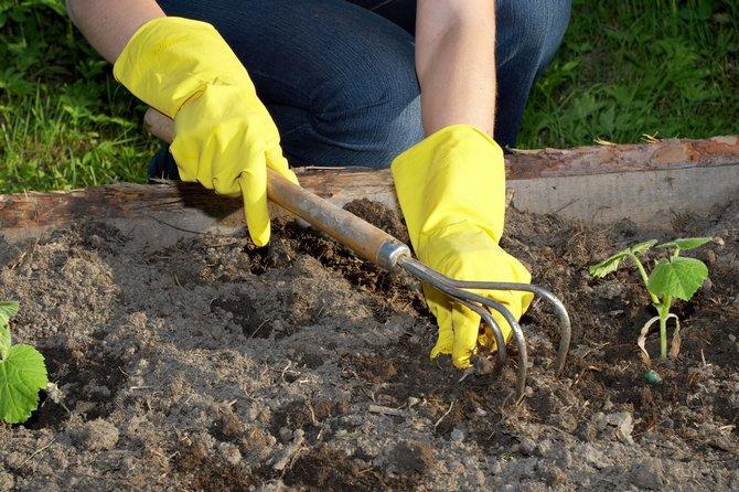 Как сажать огурцы семенами в открытый грунт