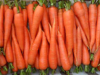 Сорта моркови для зимнего хранения