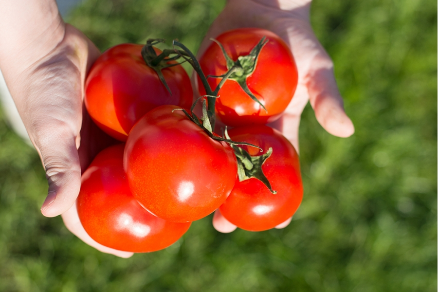 Томат Виагра: характеристика и описание сорта, урожайность, фото, отзывы