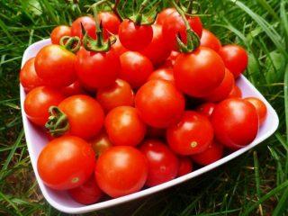 Обзор новых сортов томатов на 2019 год
