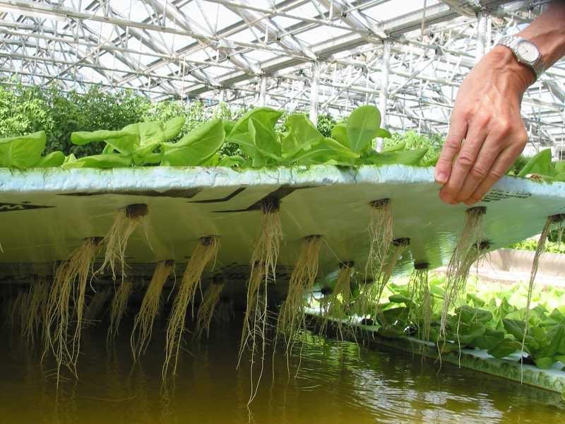 Оборудование гидропоника для выращивания зелени 89