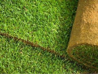 Рулонный газон на участке – преимущества и виды