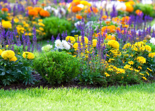 Многолетники для дачи цветущие все лето – названия и фото