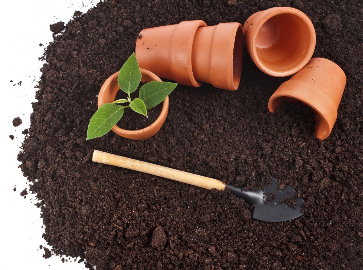Грунт для баклажанов: подготовка и обеззараживание почвы перед высадкой рассады