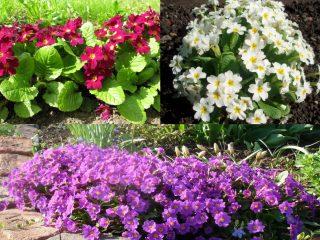 Тенелюбивые многолетники, цветущие все лето