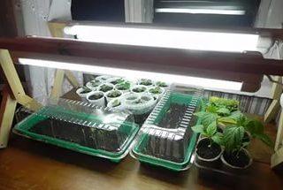 Как вырастить рассаду перца и помидоров
