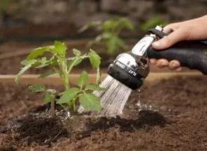 Когда сажать помидоры на рассаду для открытого грунта