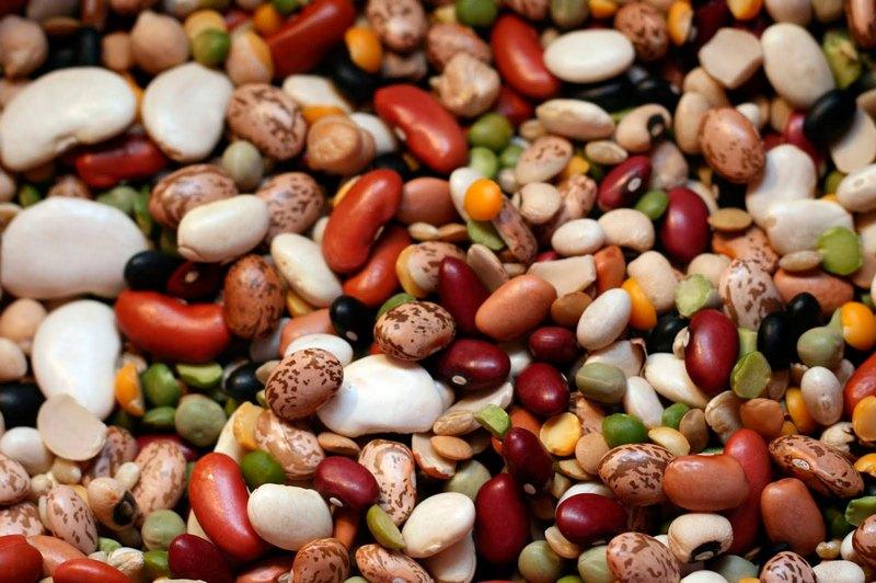 Фасоль красная шапочка описание сорта, семена стручковой фасоли