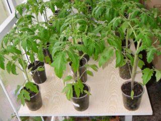 Стимуляторы роста рассады томатов