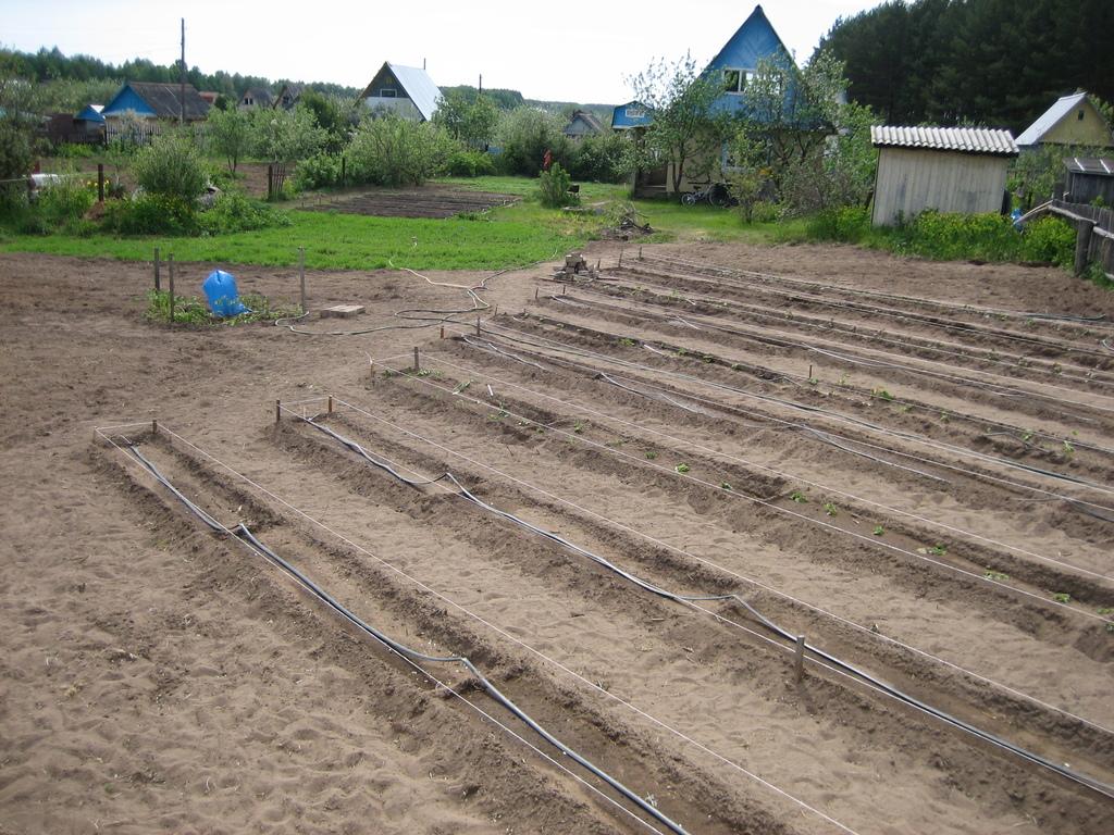 Лучшие способы посадки картофеля