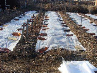 Благоприятные дни в апреле для посадки картофеля