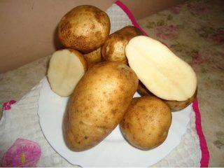 Картофель Удача