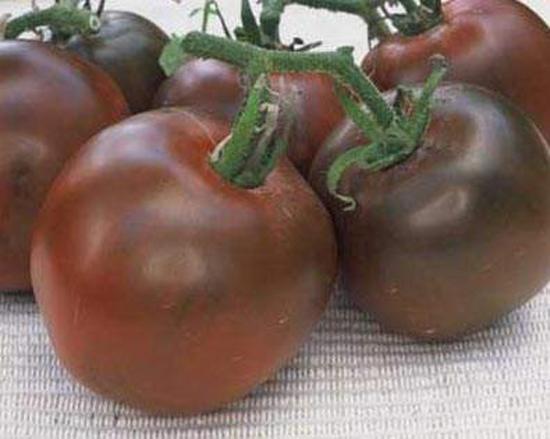 томат черный мавр отзывы фото