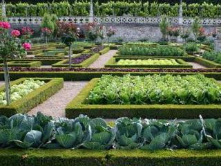 Как красиво сделать грядки в огороде + фото