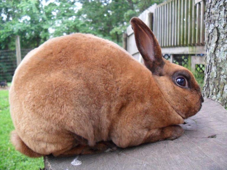 Какие бывают виды кроликов с фото