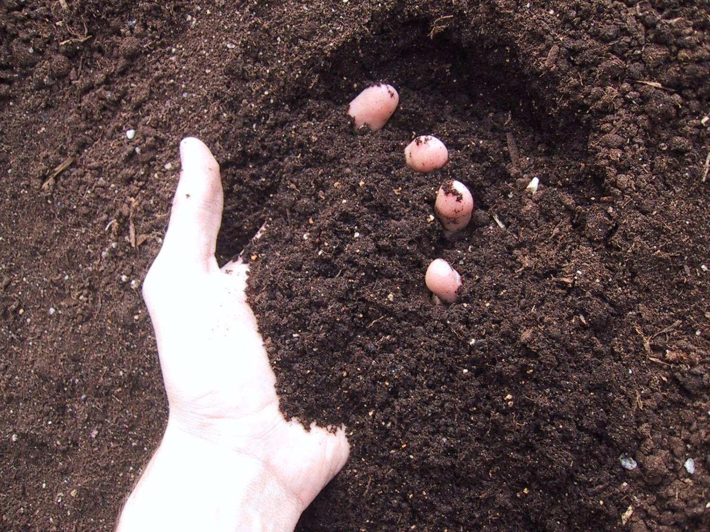 Грунт для грядок огорода