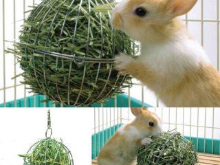 Что едят декоративные кролики