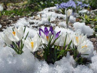 Ранние садовые цветы-многолетники