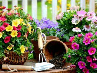 Садовые цветы-многолетники: фото с названием