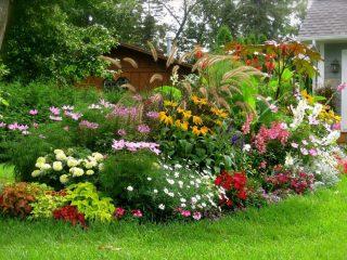 Цветы-многолетники для дачи