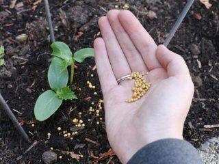 Подкормка огурцов органическими удобрениями