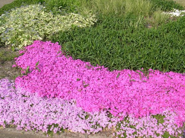 Красивые растения для бедных земель