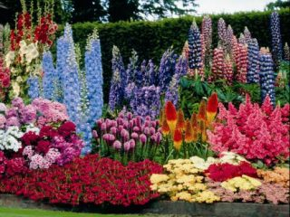 Цветы-многолетники на даче, цветущие все лето