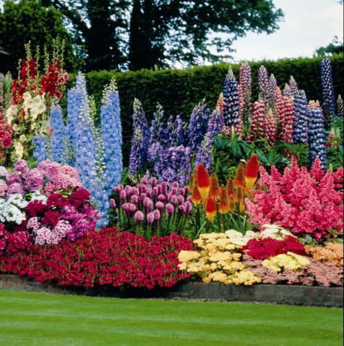 Многолетние цветы на сад