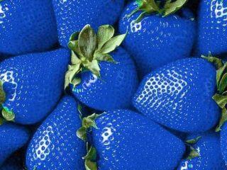 Бывает ли синяя клубника