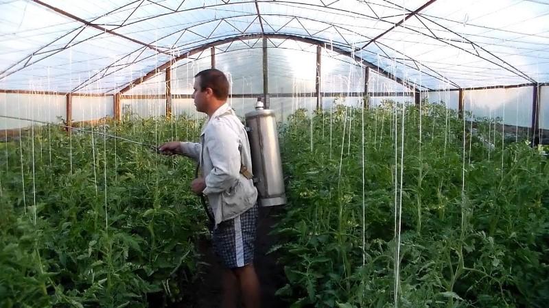 7 лучших фунгицидов для томатов применение в теплице и открытом грунте