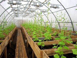 Как сделать теплицу для выращивания огурцов круглый год