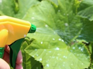 Удобрения для огурцов: фосфорные, зеленые, натуральные, из яичной скорлупы