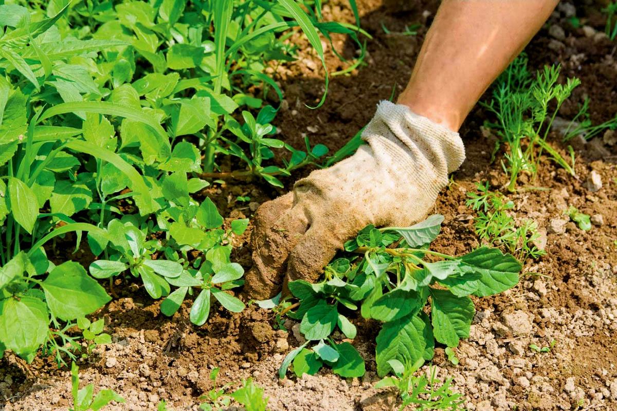 Как избавиться от сорняков на дачном участке и в других местах