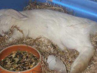 Болезни у кроликов и как их лечить